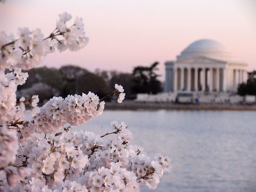 washingtondc cherryblossoms jeffersonmemorial 2007 powershotpro1