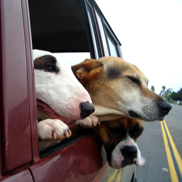 dog photo road - photo #19
