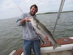 bass, fish, fishing, recreation, casting fishing, jigging, big game fishing, angling,