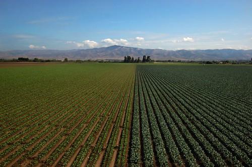california mountain green d50 nikon nikond50 valley bayarea crops soledad 24mm 2007 tokina1224mm