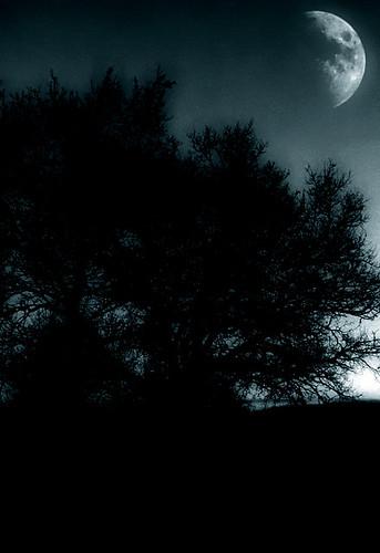 morning light sunset sky cloud sun moon storm tree night sunrise dark tramonto nuvole cloudy alba cielo monocromatic sole acqua pioggia notte vento notturno temporale tempesta mattino sunrising davdenic daviddenicolò daviddenicolo