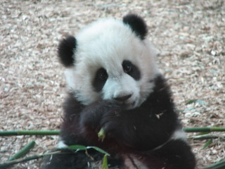 Too cute for words - Mei Lan