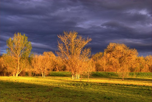 trees light sunlight lake color grass clouds landscape bravo colorado colorful shadows chatfield littleton 200705