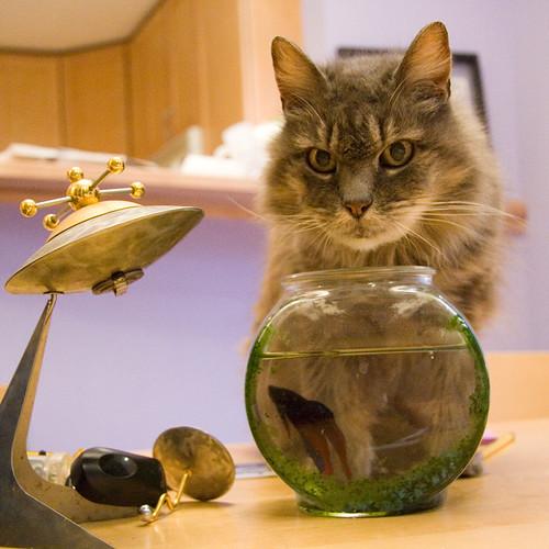 Ein goldfisch f r die blumenvase fischtante s for Welche fische fur miniteich