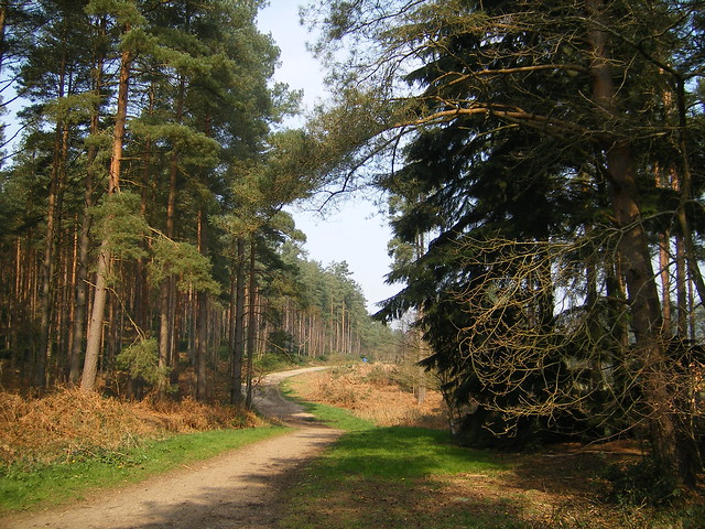 Bourne Wood