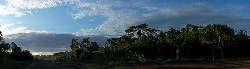 trees southamerica clouds sunrise ecuador amazon rainforest panoramic basin sanjuan jungle airstrip