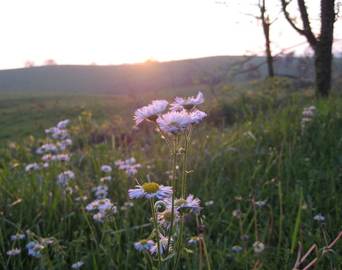 morning flowers plants macro field grass closeup rural sunrise countryside early am wind kentucky country windy pleasanthill blown shakervillage