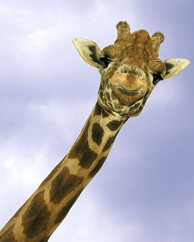 How about a longneck
