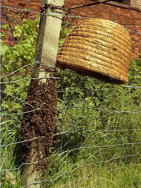 on how to build a bee skep