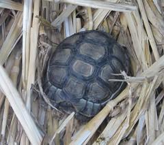 Tiny Baby Tortoise