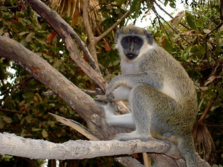 See the wildlife of the region at West Kiang National Park  - Things to do in Banjul