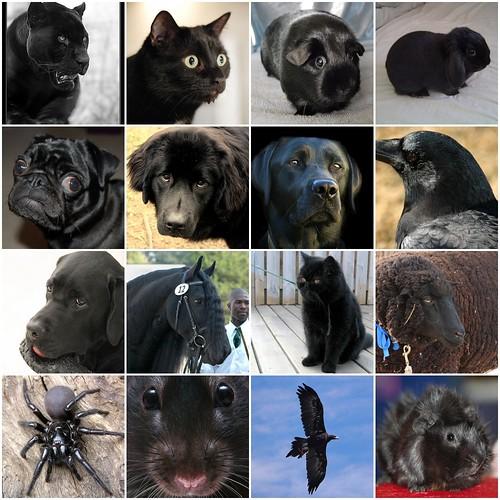 I like black animals too!