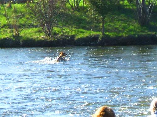 Fun in the Speed River   (1411) by lizlio