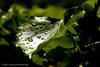 LeafLight by nubui