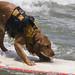14june2007-surfing-dog-saint-kat