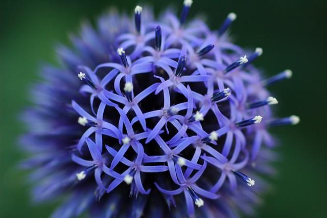 For You Flowers >> 24924118_932b809e09_z.jpg