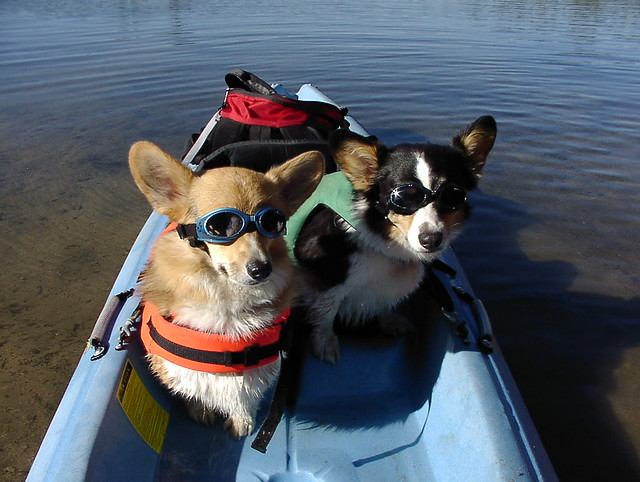 The Corgis and Their Gear.