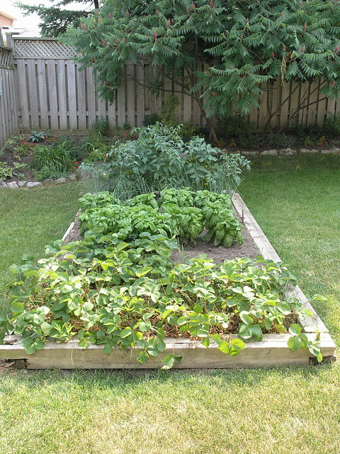 Small vegetable garden flickr photo sharing for Small vegetable garden