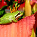 Tree Frog by Protection Island