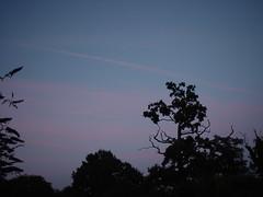 Evening Contrails