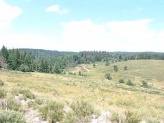 The Pratauberat Forest