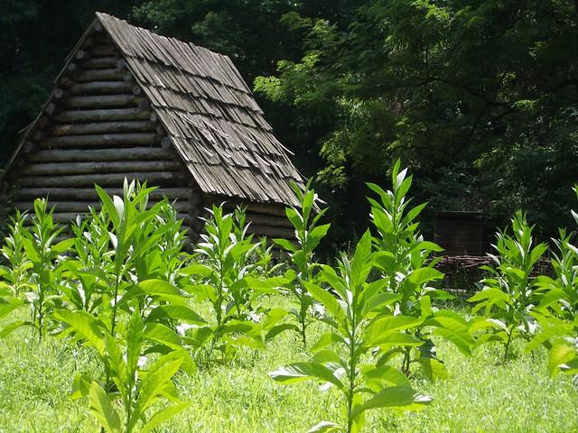 Tobacco Farm Related K...