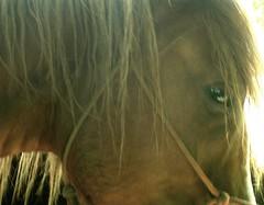 I met a horse