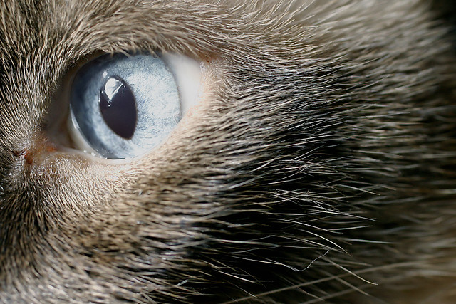 Cat S Eye Shooter Marbles