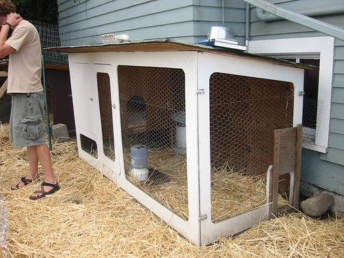 Chicken pics photos of popular chicken breeds and all for Basic chicken coop