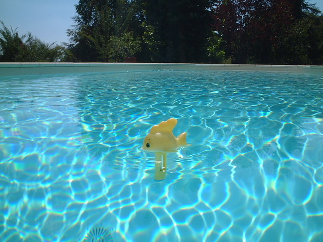 Yellow fish blue swimming pool flickr photo sharing for Swimming pool fish