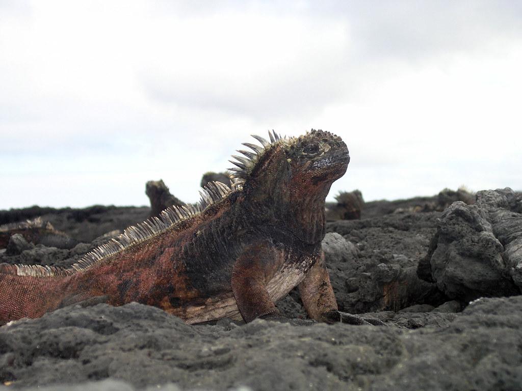 Galapagos Islands 2005
