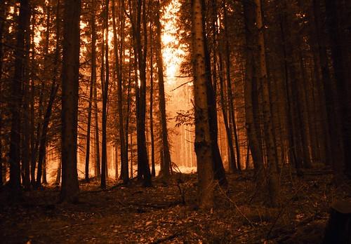 I brist på fria bilder från Ojnareskogen får en annan fin skog, utanför Oberursel i Tyskland, illustrera inlägget. Foto: Anton Raath (Fugue på flickr), CC-BY-SA 2.0.
