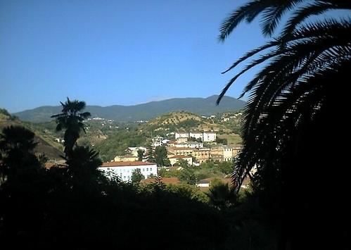 italy mountains palm calabria centrostorico cosenza regionecalabria