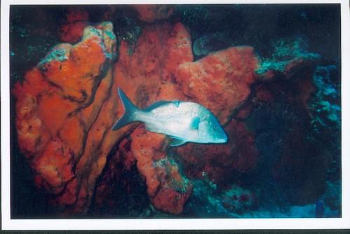 Conoce los arrecifes de corales en Cozumel