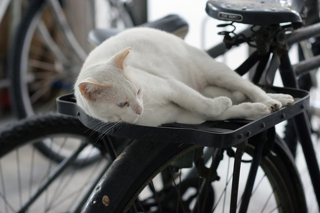 cat on wheels