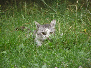Lurking cat