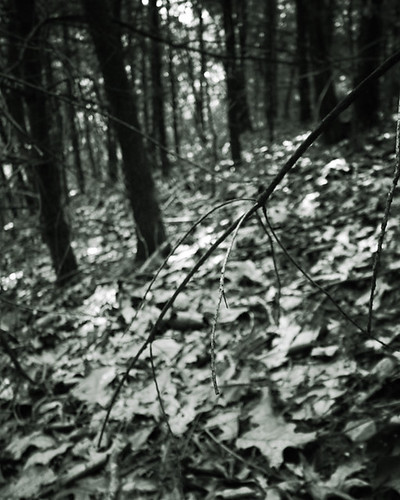 blackandwhite softfocus woods forest leaves mysterious spooky dark promotion