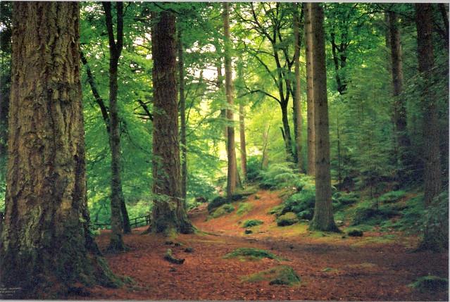 Tay Forest Scotland June 2000 Taken With A Minolta