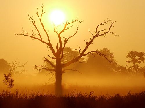 uk original orange sun mist tree sunrise dead gold dawn amber deadtree unretouched slough berkshire kevday langley langleypark milked chromatag chromaorangeyellow chtk