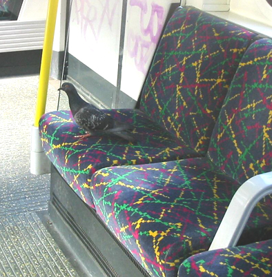 Dogs, coats, parrots: amuse yourself with photos of animals on the tube