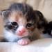 Kitten by lilanimal
