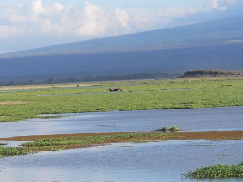 肯亞的濕地。(攝影:Wouter van Vliet)