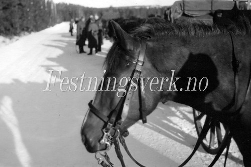Sarpsborg 1940-1945 (291)