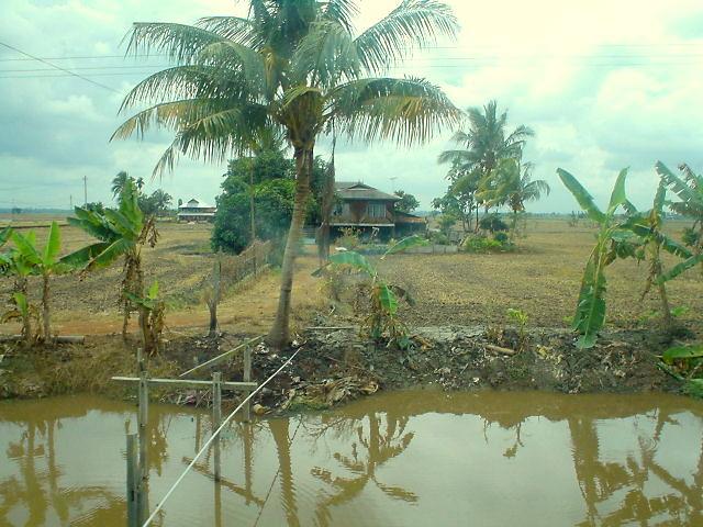 Gambar2 Rumah Kampung Rumah Kampung di Tepi Sawah