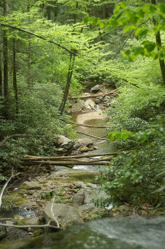 d50 wnc pisgahnatlforest hiking nc blueridgemountains waterfalls hickeycreekfalls luxifurr