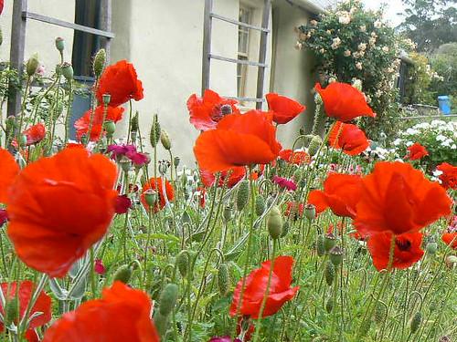 Flowers Spanish To English Flashcards Quizlet