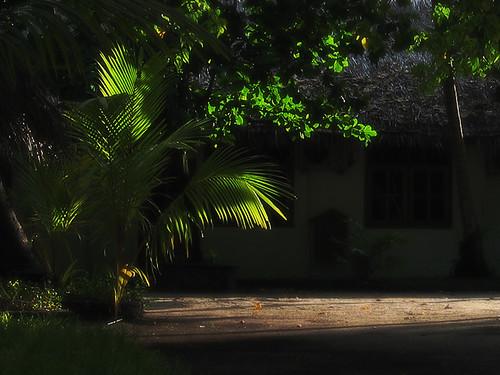 tree sunshine geotagged island ray palm tropical maldives lightanddark badge2 fihalhohi geo:lat=3877185 geo:lon=73367965 jsscrnsvr