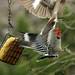 ARTSY-BIRDSY 1 by k.nanney