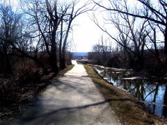 Swamp Walkway