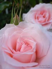 Bridal Pink +ブライダル・ピンク+
